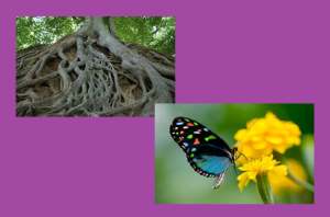 Корешки и бабочки